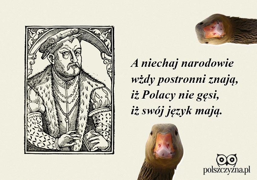 Polacy nie gęsi… Co Rej miał na myśli?