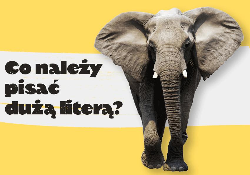 Co należy pisać dużą literą? Zasady pisowni dużą literą (i wielką) - Polszczyzna.pl
