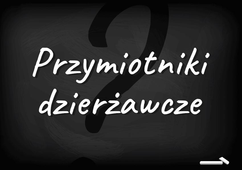 Dzieło Mickiewiczowskie i program polsatowski – przymiotniki dzierżawcze. Czym są i jak ich używać? - Polszczyzna.pl