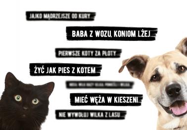 Frazeologizmy i przysłowia o zwierzętach – czego dotyczą i kiedy powinniśmy ich używać? - Polszczyzna.pl