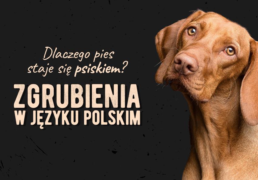 Zgrubienia w języku polskim przykłady podział wyjaśnienie definicja wiocha psisko Polszczyzna.pl