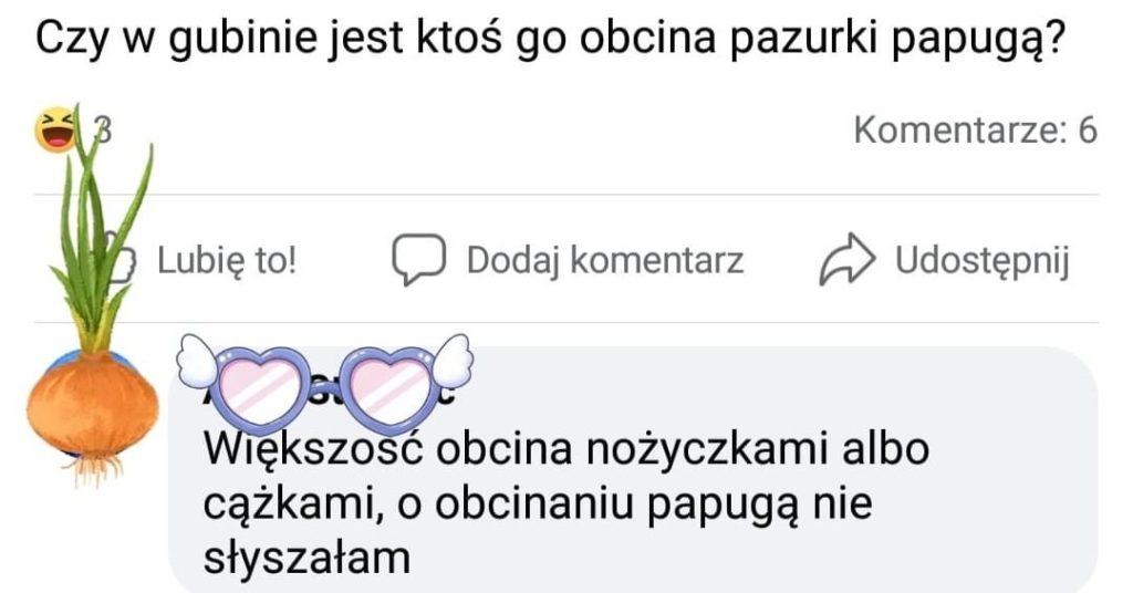 papuga perełki polszczyznowe prosto z ulicy. Wpadki błędy językowe Zabawne śmieszne żart Część 9 - Polszczyzna.pl